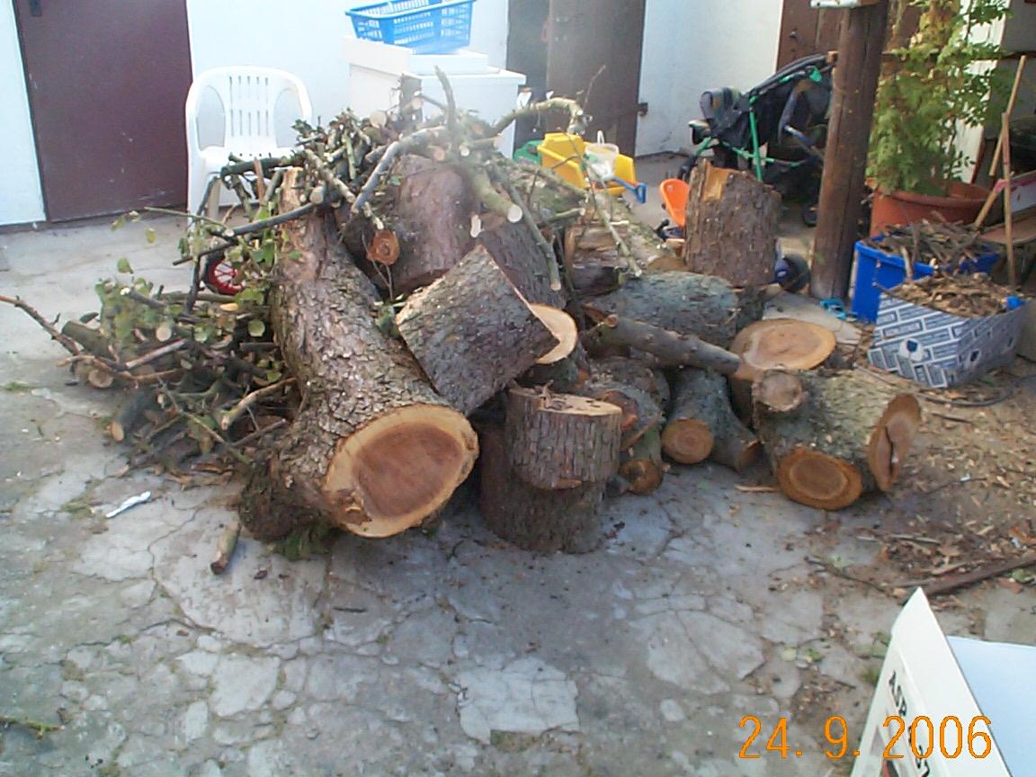 Holz, alter Apfelbaum