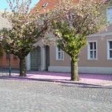 Baumblüte in Ziesar Breiter Weg, 2008