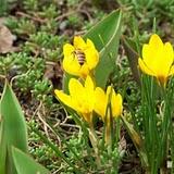 14.03.2009 der Frühling ist da